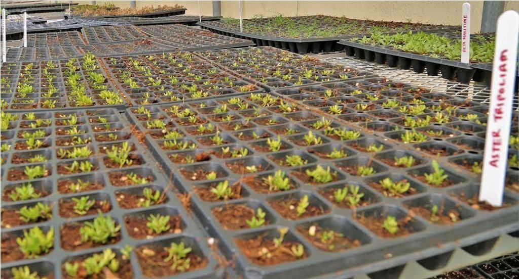 الإمارات تنجح في زراعة خضروات ملحية
