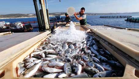 صيد بحري