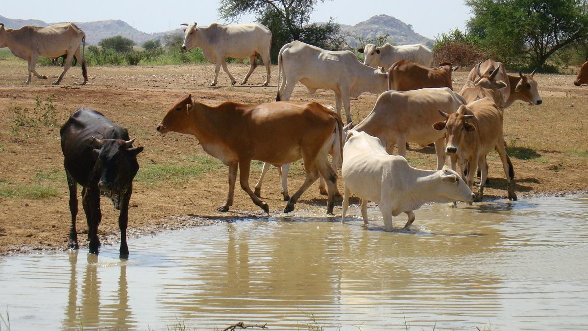 الثروة الحيوانية