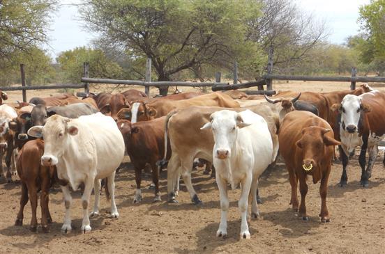 ثروة حيوانية في ناميبيا