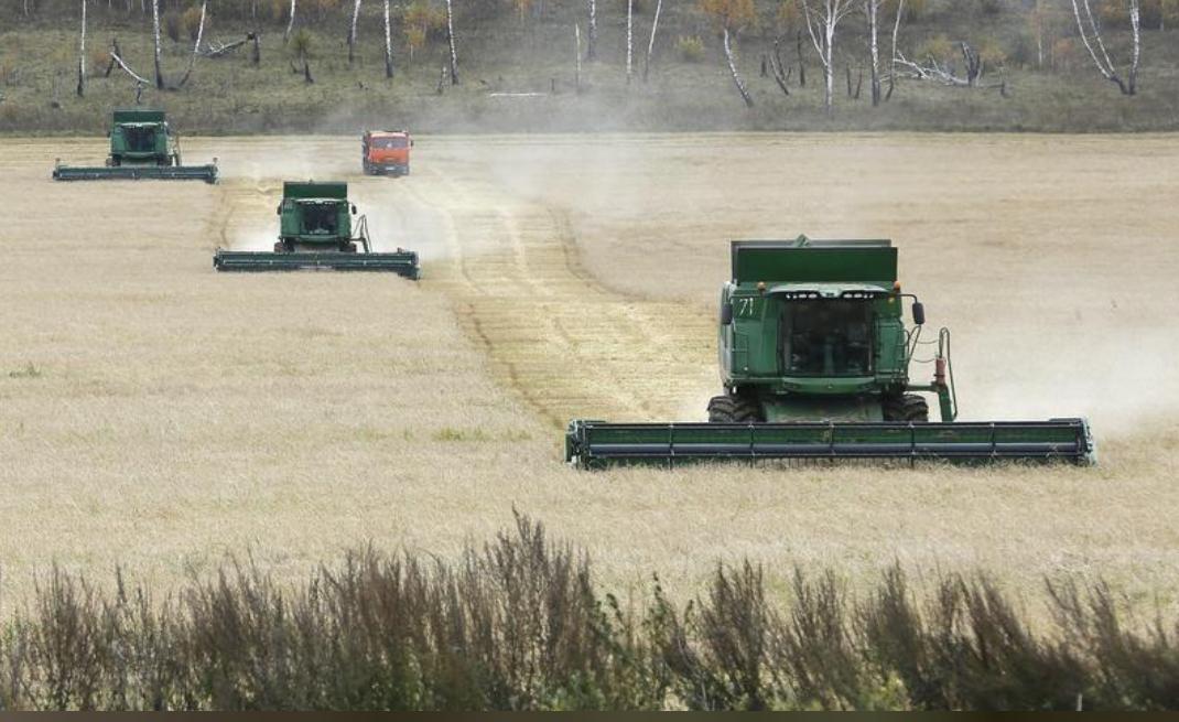 عملية جني القمح في أحد حقول كراسنويارسك بروسيا