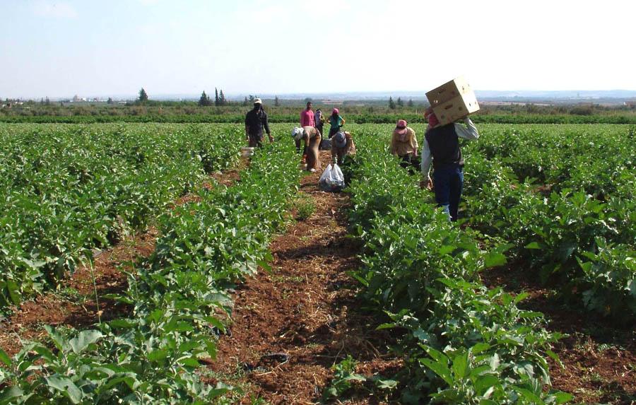 الانتاج الزراعي
