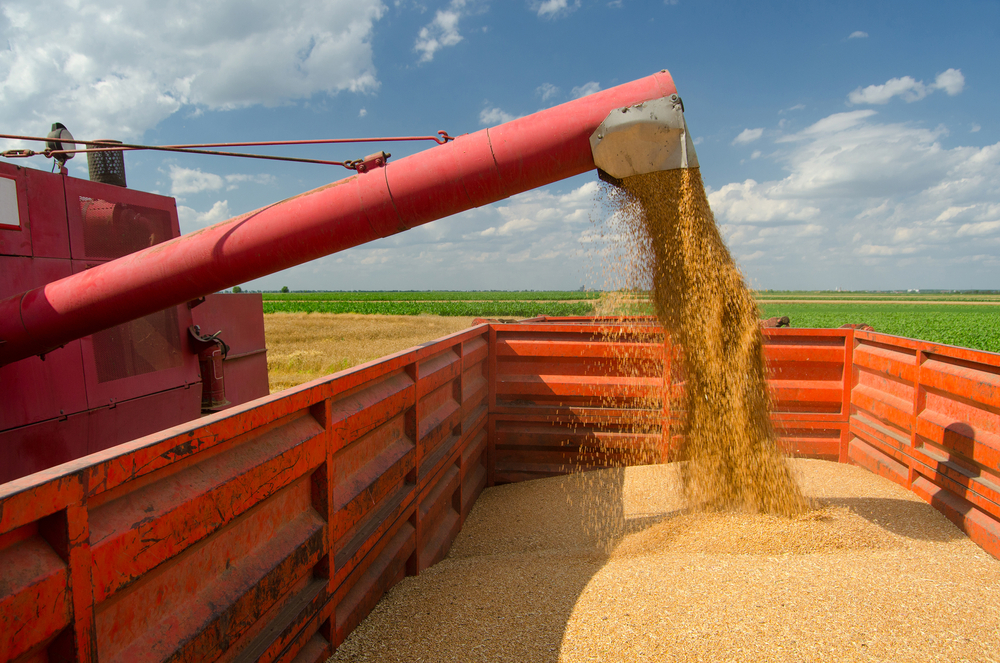 الأردن يطرح مناقصة لشراء 200 ألف طن من القمح وعلف الشعير