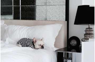 فندق دبليو دبي الحبتور سيتي يرحب بالحيوانات الأليفة
