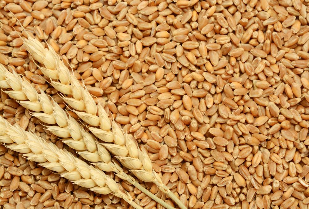 احتياطي مصر من القمح