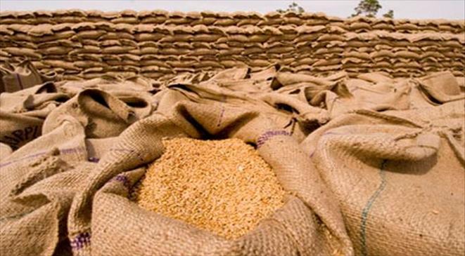 أطنان من القمح (صورة تعبيرية)