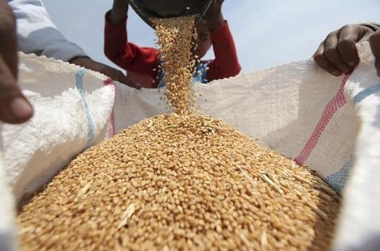 تجارة القمح في الأردن (أرشيقية)