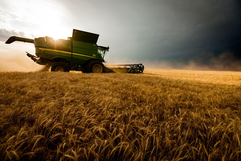 شحنة من القمح الأمريكي