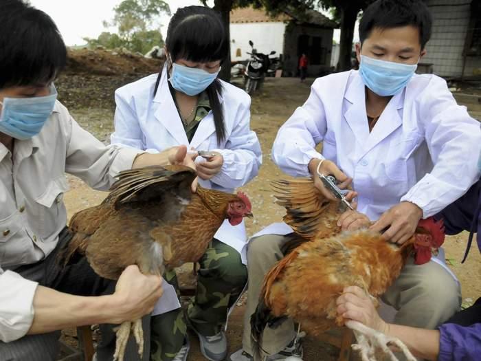تطعيم دجاج (صورة ارشيفية)