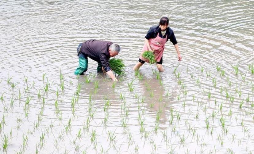 مزارعان صينيان صورة من رويترز