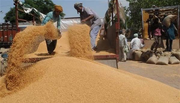 القمح العراقي