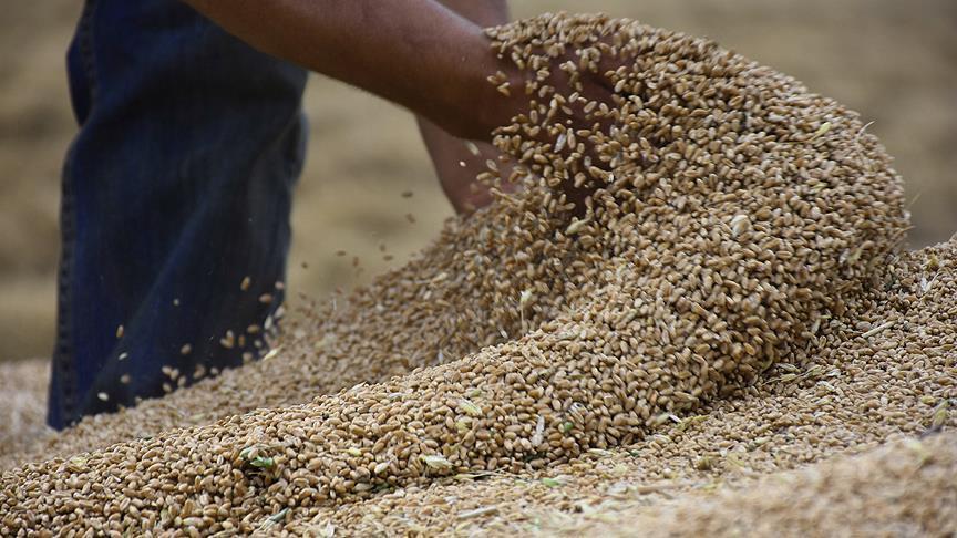 السعودية تشتري 960 ألف طن من الشعير في مناقصة عالمية