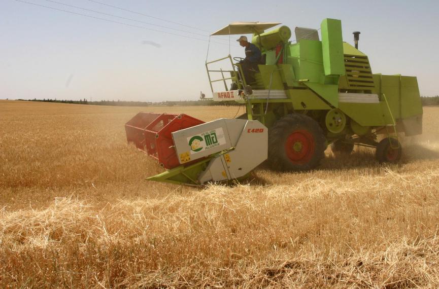 إنتاج الجزائر من الحبوب