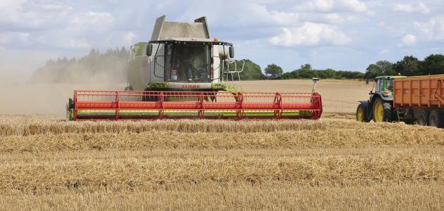 حصاد القمح في تونس