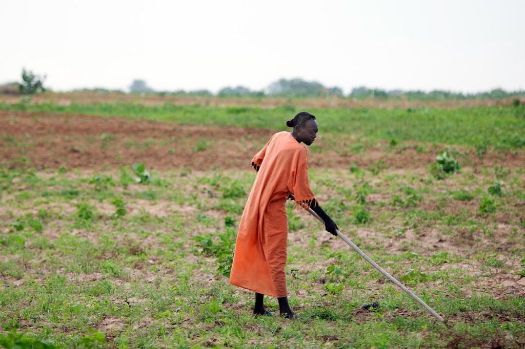 مزارعو زيمبابوي