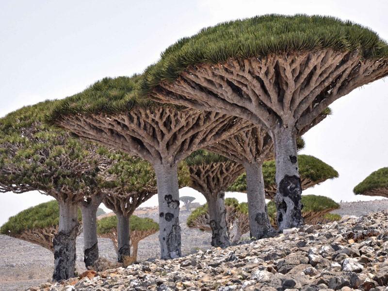 الاشجار في الامارات