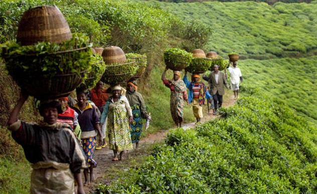 الزراعة فى أفريقيا