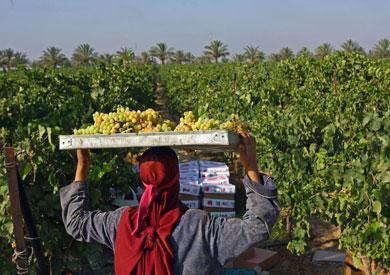 حاصلات زراعية
