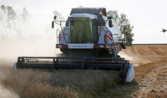 آلة تحصد القمح في أحد الحقول