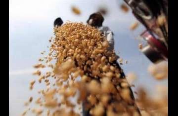 مصر تشتري 230 ألف طن من القمح الروسي في مناقصة
