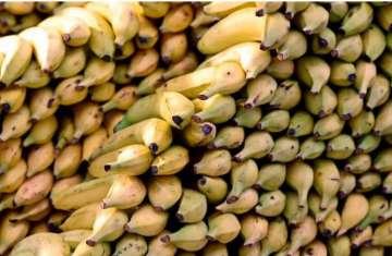 الموز الذي أنتج مؤخرا أكثر حلاوة من غيره