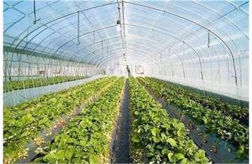 الصور الزراعية